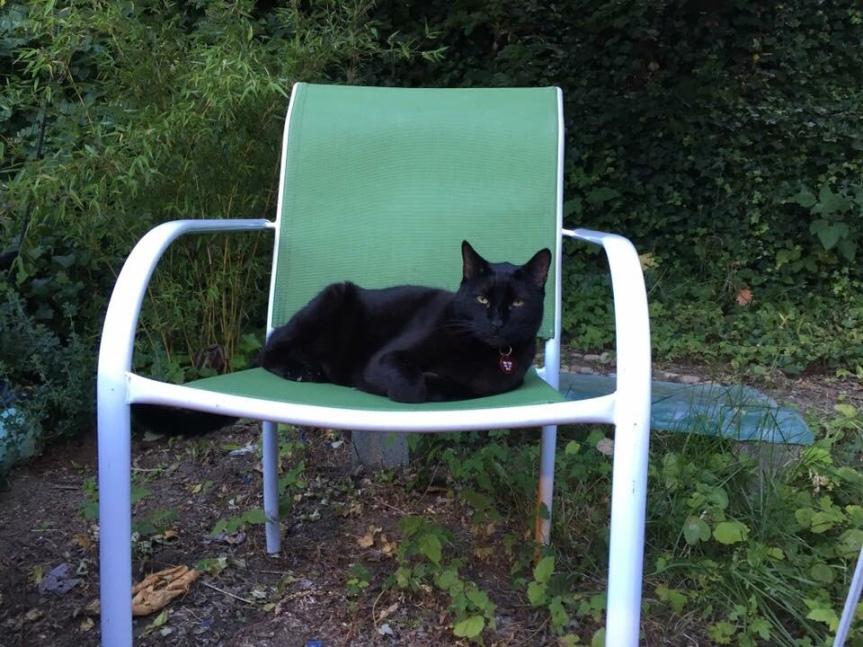 Vincent- A catstory